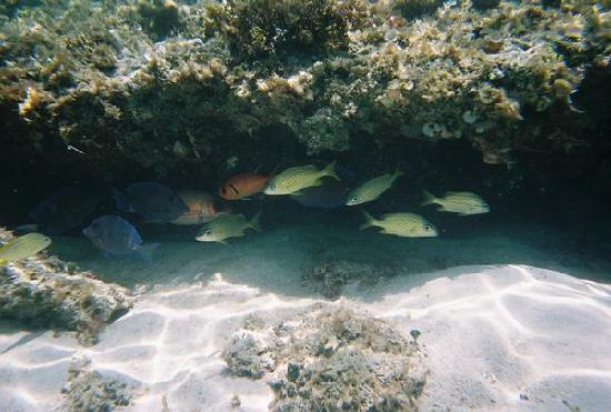 Providenciales: underwater view