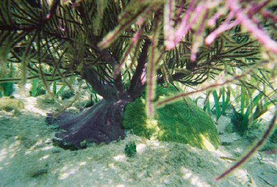Providenciales: underwater coral and plant