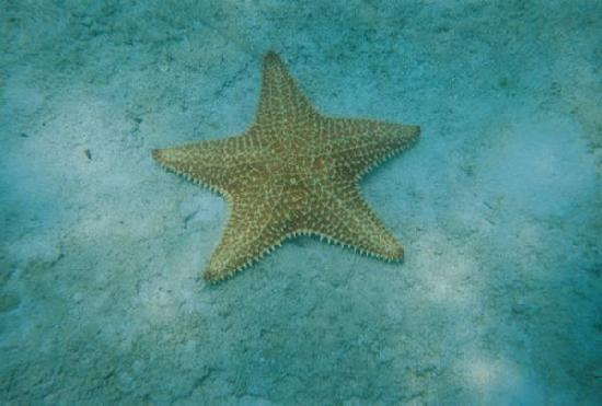 Providenciales: starfish!