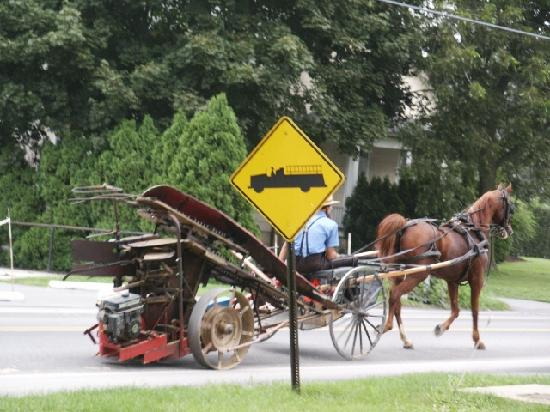 Flory's Cottages & Camping: Amish passing your cottage.