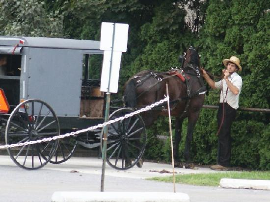 Flory's Cottages & Camping: Amish man across street from cottage.