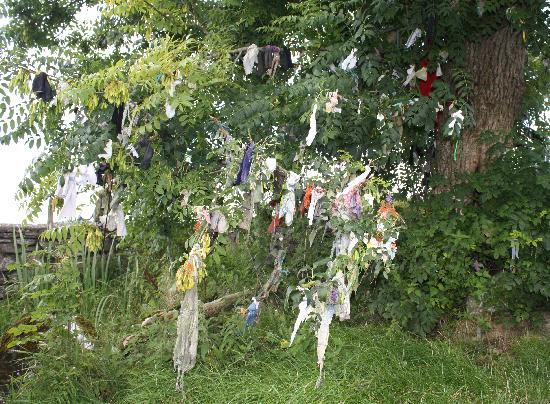 Fore Abbey: Ireland: co. Meath - Fore: the Rag Tree