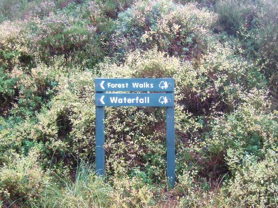 Strathmashie Forest: Druim An Aird walk,Scotland.