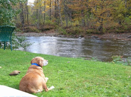 Phineas Swann Bed and Breakfast Inn: Lucy relaxing by the river