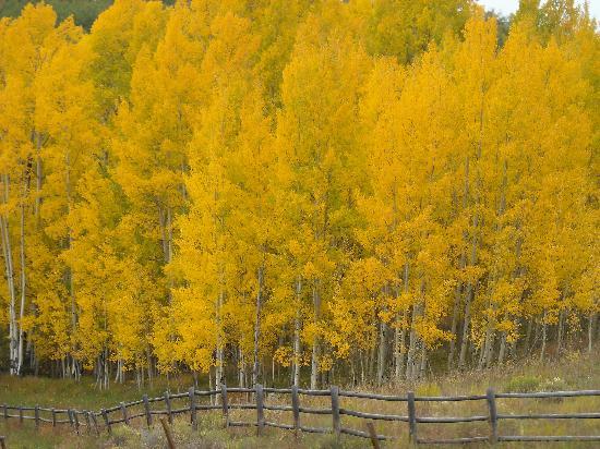 Colorado: Fall Colors