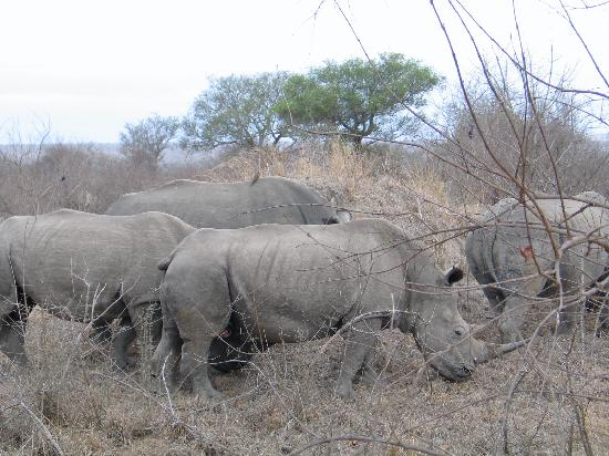 Arathusa Safari Lodge: Rhino
