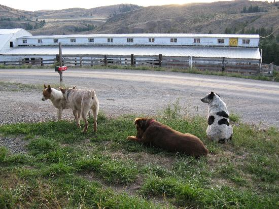 Chewack River Guest Ranch: friendly working dogs