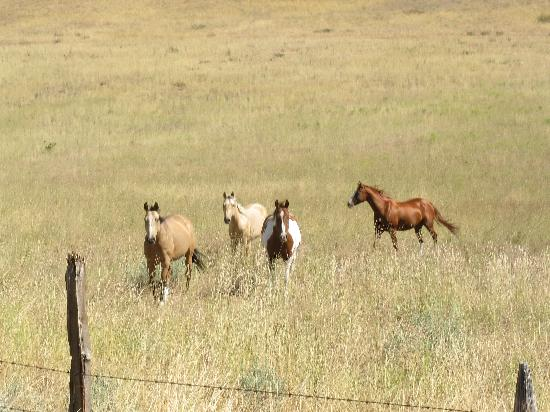 Chewack River Guest Ranch: stragglers on the loose