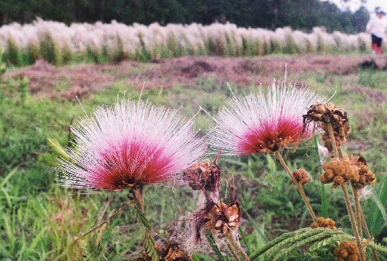 Goiás: Wild Flower in the Park Emas, Mineiros-go-brazil