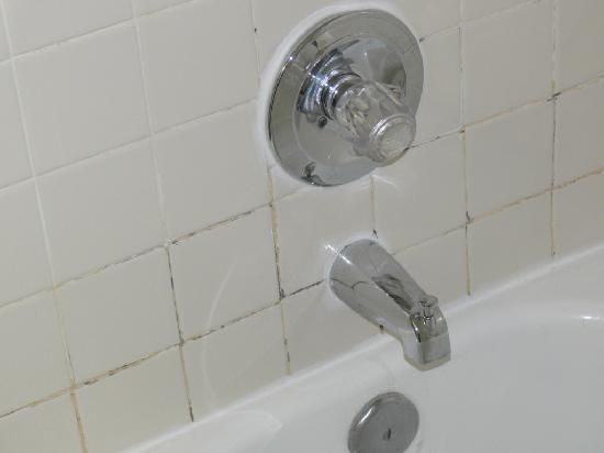 Quality Inn & Suites-Capital District: Moldy grout at Quality Inn