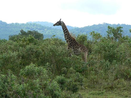 Four Points by Sheraton Arusha, The Arusha Hotel : Arusha Nat'l park