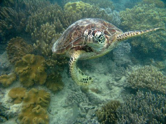 Reef Experience: Sea Turtle