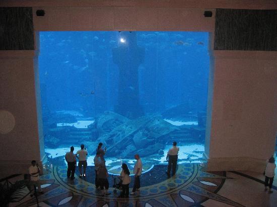 Radisson Blu Residence, Dubai Marina: The massive aquarium in Atlantis Hotel