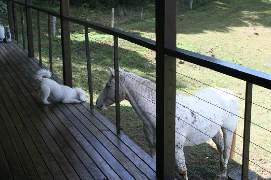 Half Moon Hide-Away: A horse saying hello to our puppy