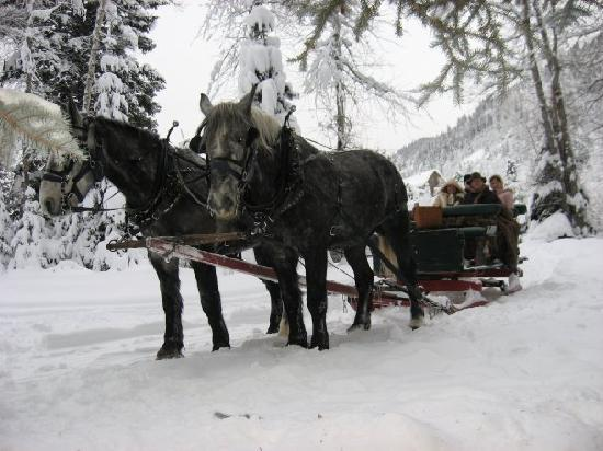 The Little Nell: Family sleigh ride..very fun!