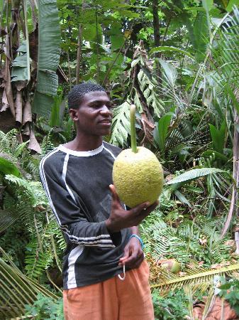 Ilhéu Das Rolas, São Tomé e Príncipe: jamierson com fruta pão