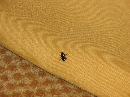 Holiday Inn Express Solvang: Bug on my bed's skirt!