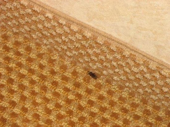 Holiday Inn Express Solvang: Another bug!