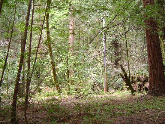 Sonoma County, Kaliforniya: Redwoods at Armstrong Woods