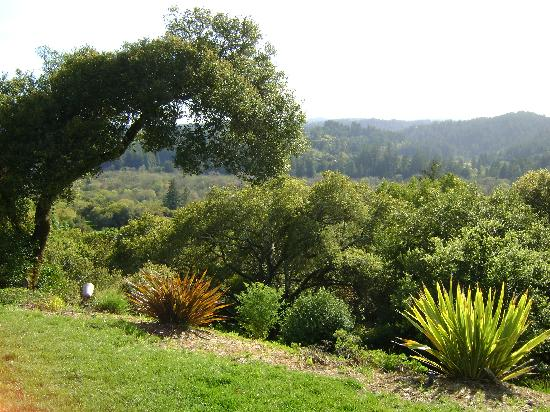 Sonoma County, Californie : View From Gary Farrel Vineyard