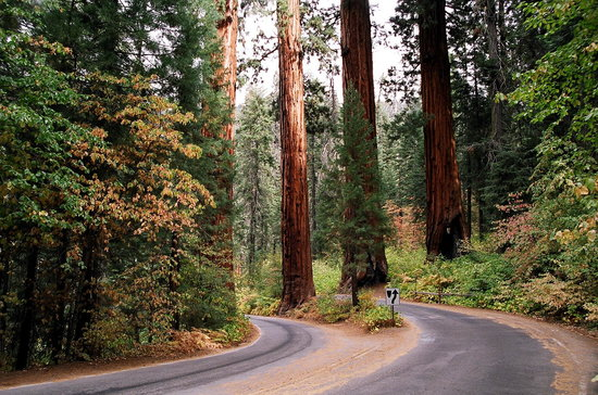 Sequoia and Kings Canyon National Park, แคลิฟอร์เนีย: The Guardsmen