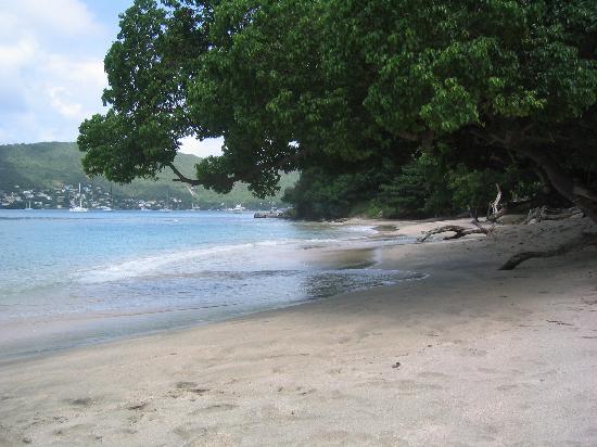 Kingsville Apartments: Lower Bay beach