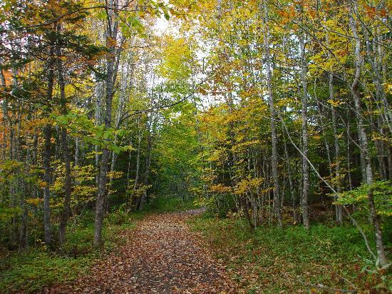 Cabot Trail: Uisge Bahn Falls drive
