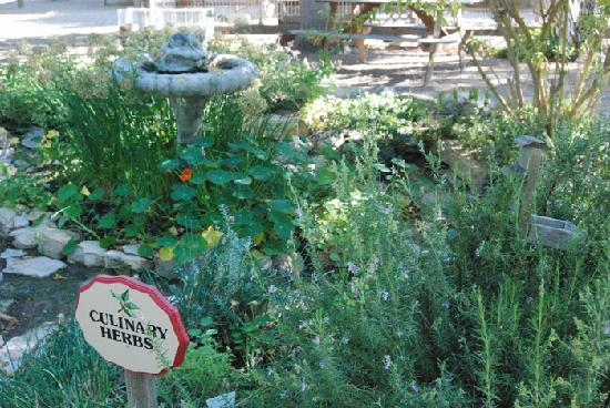 Lone Madrone Winery: herb Garden