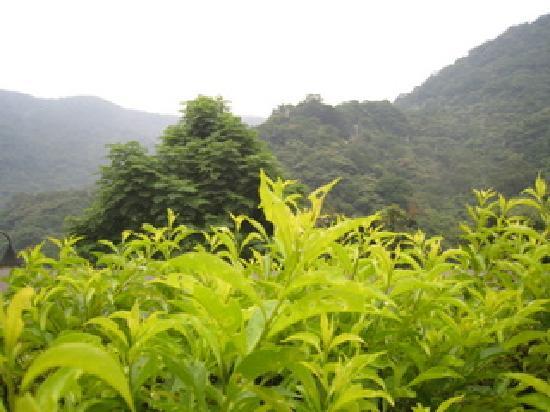 Maokong mountain: 茶芸店からの景色