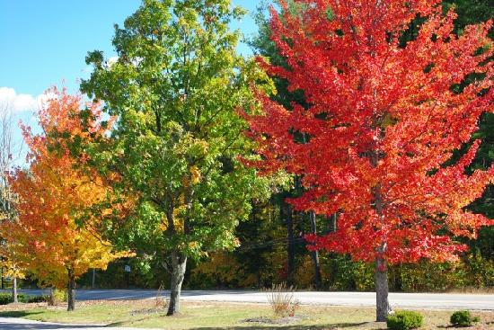 North Conway, NH: awesome colorful trees