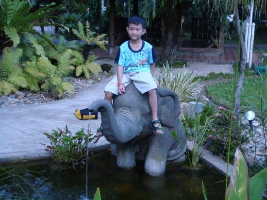 Eco Resort Chiang Mai: Another baby elephant by the pond