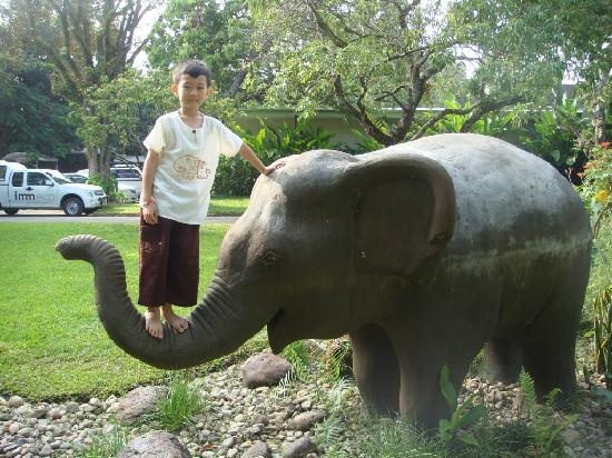 Eco Resort Chiang Mai: A young adult elephant