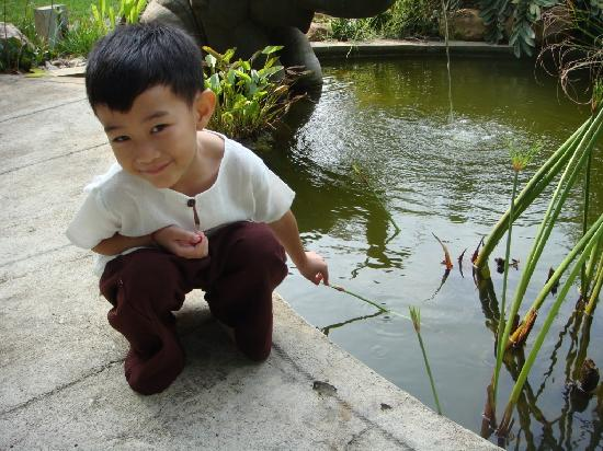 Eco Resort Chiang Mai : Little fishes in ponds, drains and pots