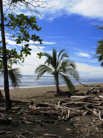 Quepos, Costa Rica: Mata Palo Beach