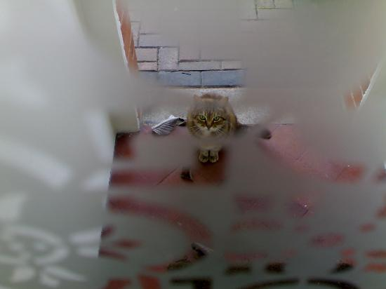 Grange Guest House: cute cat outside the Grange door
