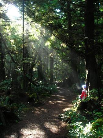 Second Beach Trail: Trail to second beach