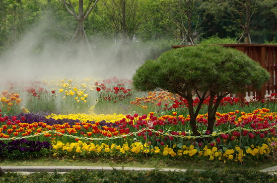 Seúl, Corea del Sur: Tulips in bloom in a downtown plaza