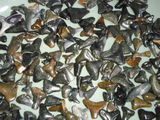 Turtle Bay Condos照片