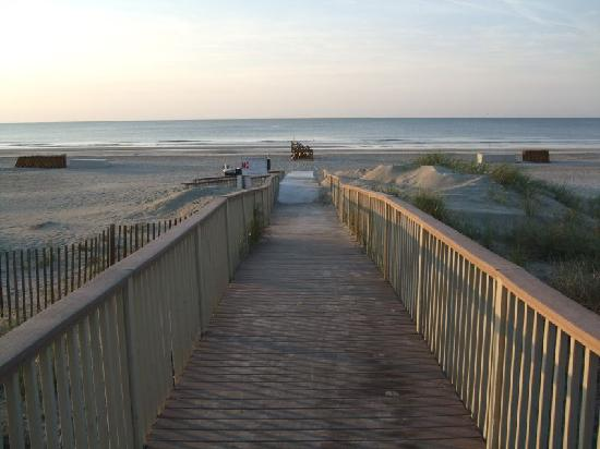 Hilton Head Health: A great walking beach - and Dolphins!