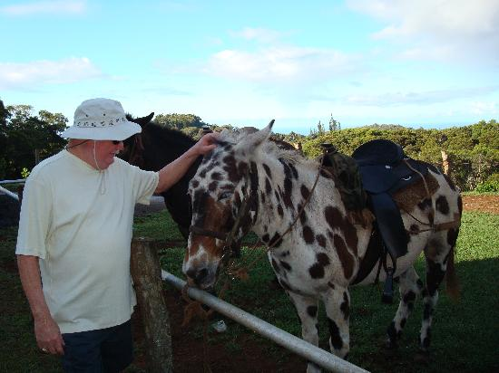 Molokai Mule Ride : Meet the friendly mule named Stripes