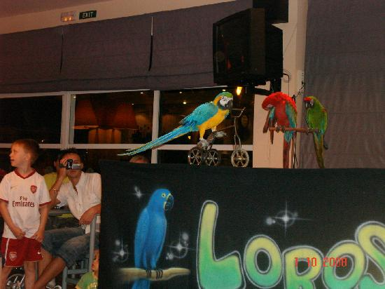 Lagoon Center: Parrot Show