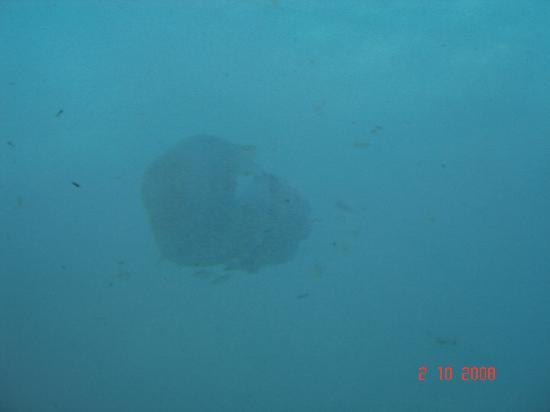 Lagoon Center: Jelly Fish (On The Glass Bottom Boat Trip)