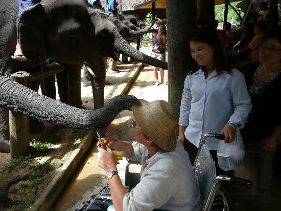 Lanna Accent Boutique Villa: Feeding the elephants with driver Auan
