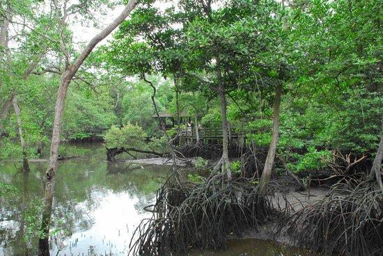 Sungei Buloh Wetland Reserve: Wetland reserve hut!