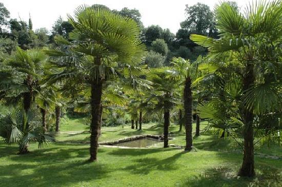 Bretagne, France : la palmeraie