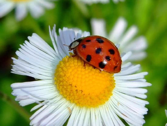 lady bug picture of sawgrass lake park st petersburg tripadvisor