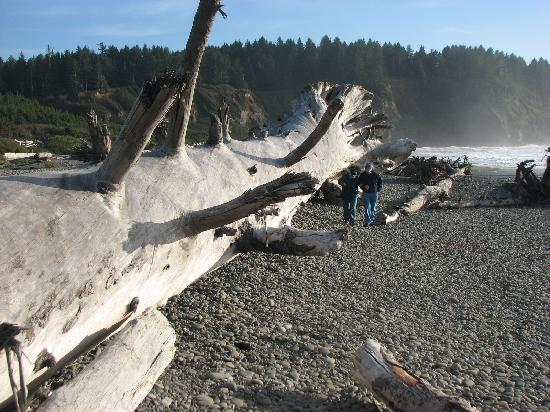 Quileute Oceanside Resort: wild beach