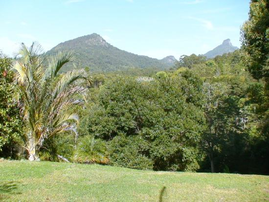 Amazing Wollumbin Palms Retreat at Mt Warning: View from our lodge