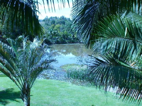 Amazing Wollumbin Palms Retreat at Mt Warning: Platypus lake