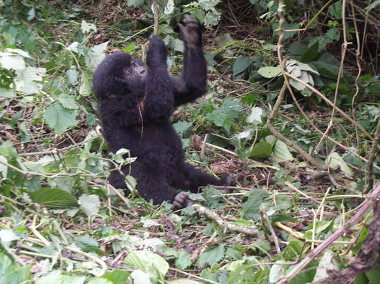 Kigali, Rwanda: big baby